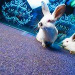 Живые кролики