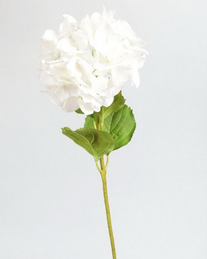 Гортензия белая (в наличии 200 шт) Цена =45 руб/шт