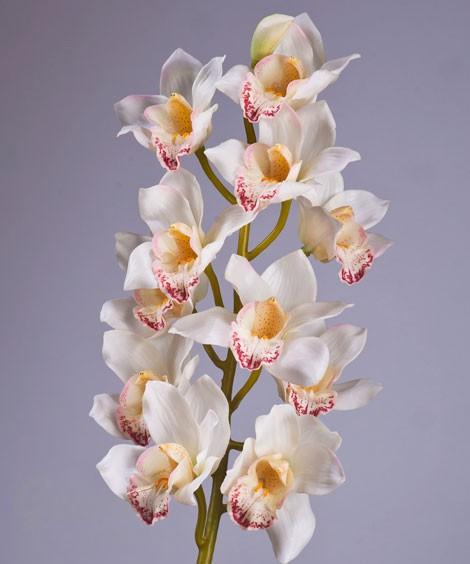 Орхидея Цимбидиум, прорезиненная , очень хорошего качества (в наличии 30 шт) Цена =80 руб/шт
