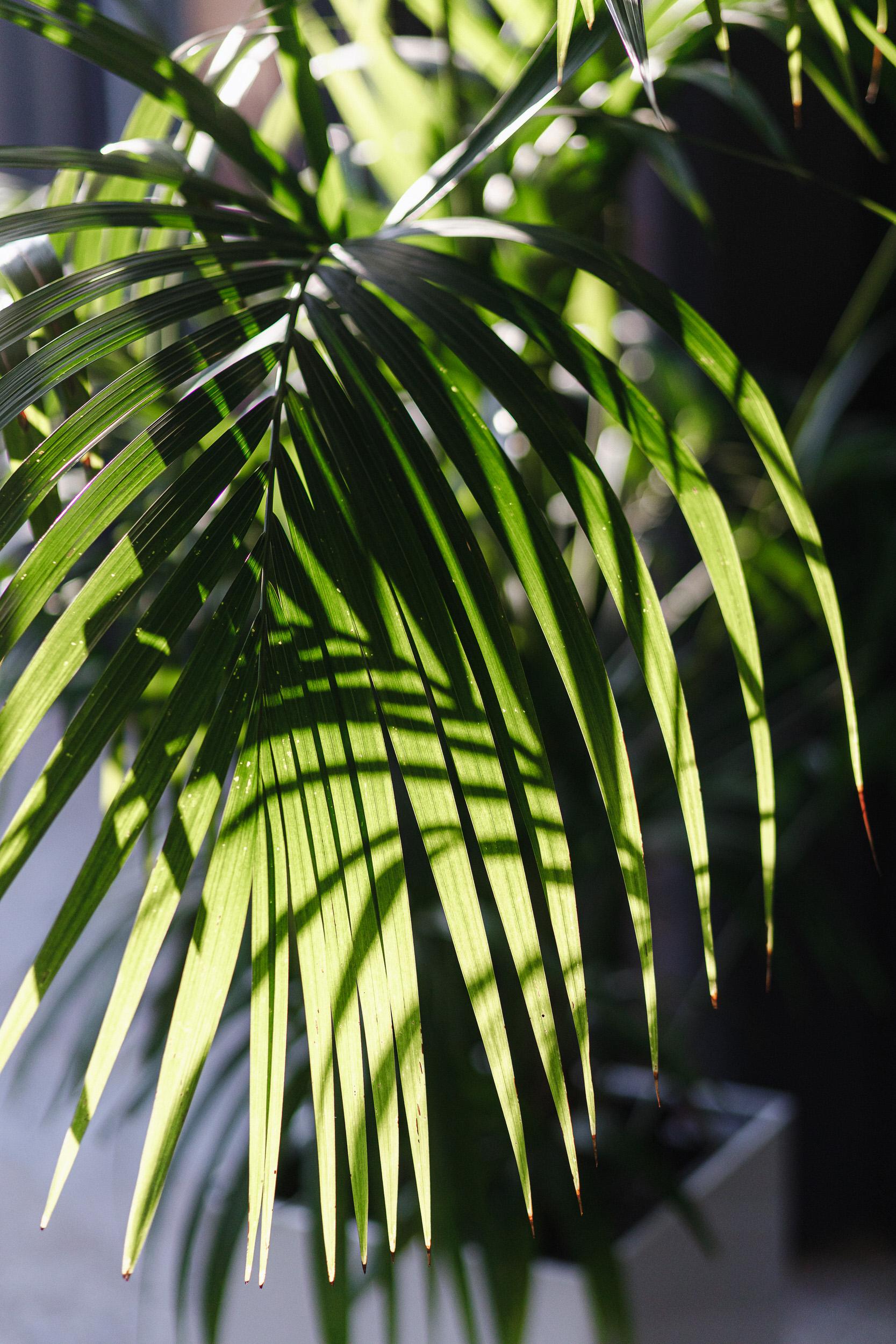 Тропические растения живые цветы