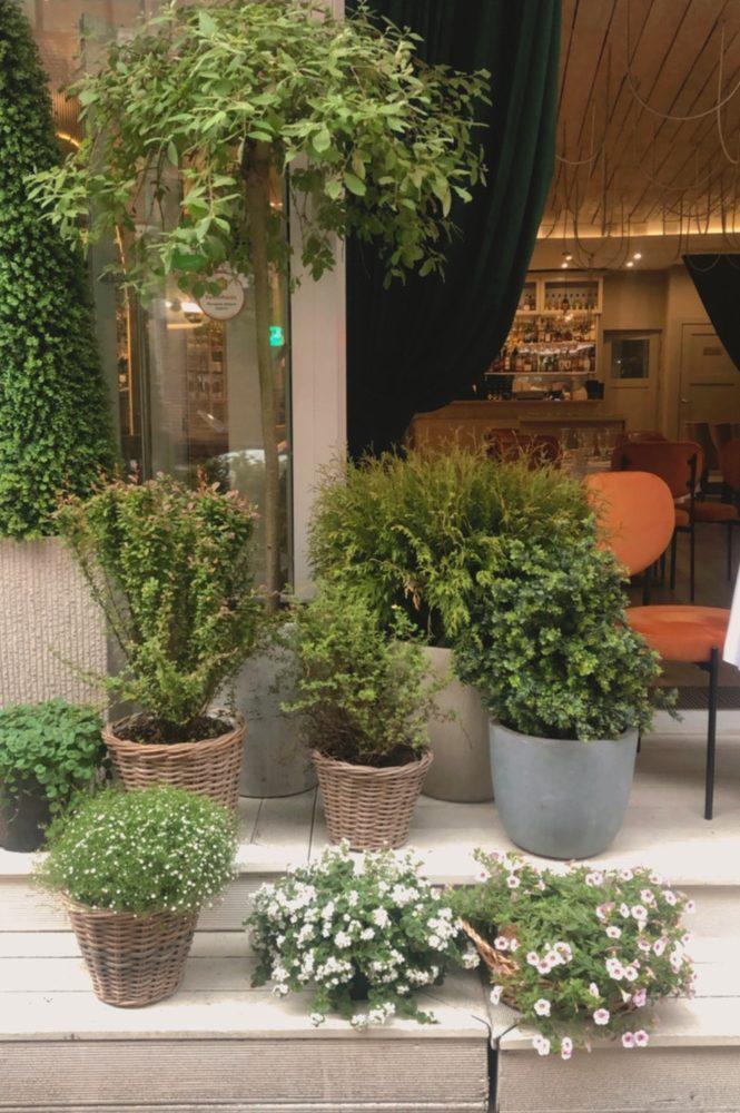 озеленение ресторана фасада декор